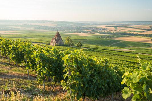 Wijnfeesten Fotograf / Quelle Dominik Ketz