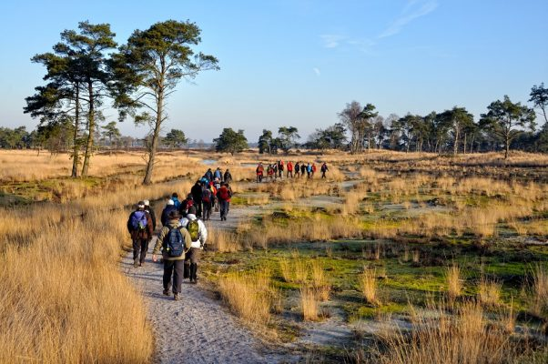 Foto: GR5 Kalmthoutse Heide copyright: Wim Patry