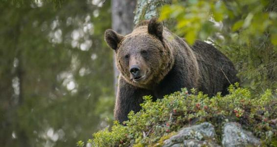 beer-in-het-berenbos