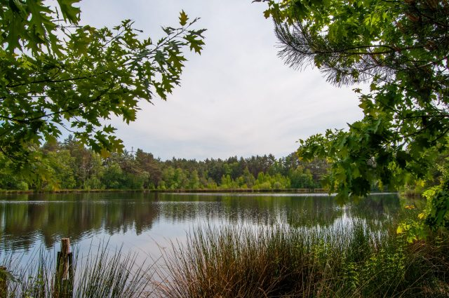Nationaal Park Hoge Kempen - Duinengordel, omgeving Donderslag