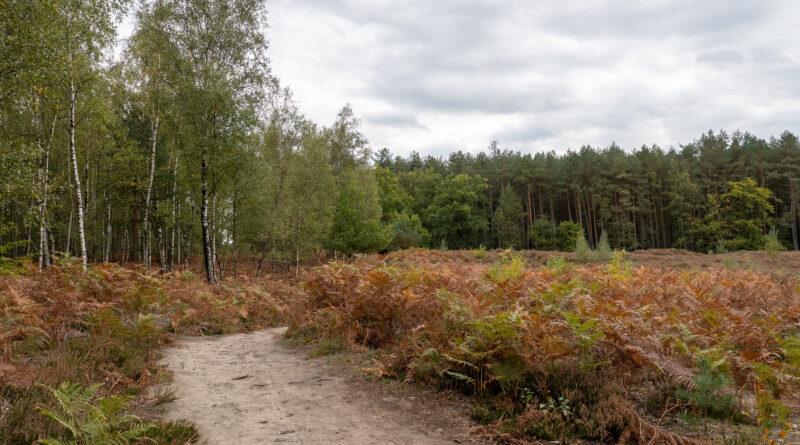 Thorpark-wandeling